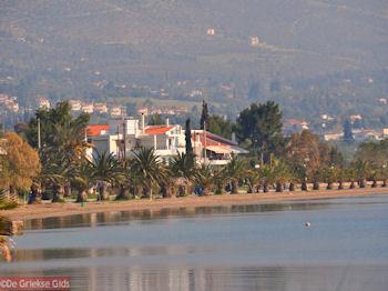 Strand met palmbomen in Eretria | Evia Griekenland | De Griekse Gids - Foto van https://www.grieksegids.nl/fotos/grieksegidsinfo-fotos/albums/userpics/10001/normal_zandstrand-eretria-centraal-evia.jpg
