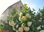 Klooster Arkadi Rethymnon - Foto van De Griekse Gids