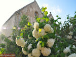 GriechenlandWeb.de Klooster Arkadi Rethymnon - Foto GriechenlandWeb.de