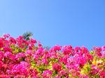 Mooie bloemen uit Kreta - Foto van De Griekse Gids