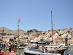 GriechenlandWeb Eenzame bloem - Insel Symi - Foto GriechenlandWeb.de