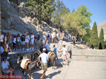 GriechenlandWeb Ezels auf de heuvel van Lindos (Rhodos) - Foto GriechenlandWeb.de