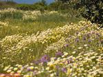 Bloemenpracht Kreta - Foto van De Griekse Gids
