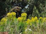 Lente in Evia,nabij Aedipos en Orei - Foto van De Griekse Gids