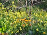 De mooie bloemen van Evia - Foto van De Griekse Gids