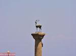 De hert - Ingang Mandraki haven - Rhodos stad - Foto van De Griekse Gids