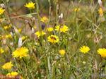 Bijen en vlinders op bloemen (Kreta) - Foto van De Griekse Gids
