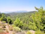 Bossen in centraal Rhodos - Foto van De Griekse Gids