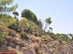 Rhodos natuur (Vlindervallei Rhodos) - Foto van De Griekse Gids