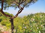 Groene omgeving Petaloudes (Vlindervallei Rhodos) - Foto van De Griekse Gids