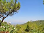 GriechenlandWeb.de Bosrijke omgeving Rhodos (bij Vlindervallei) - Foto GriechenlandWeb.de