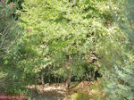 JustGreece.com De groene, waterrijke vallei Petaloudes (Vlindervallei Rhodos) - Foto van De Griekse Gids