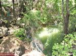 GriechenlandWeb Vlindervallei Rhodos - Petaloudes - Foto GriechenlandWeb.de