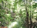 Petaloudes - Vlindervallei Rhodos - Foto van De Griekse Gids