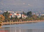 Strand met palmbomen in Eretria | Evia Griekenland | De Griekse Gids - Foto van De Griekse Gids
