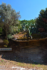 Moni Theoktistis bij Kampos Ikaria | Avlaki Ikaria Foto 1 - Foto van De Griekse Gids
