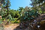 Moni Theoktistis bij Kampos Ikaria | Avlaki Ikaria Foto 4 - Foto van De Griekse Gids