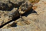 GriechenlandWeb.de Nas Ikaria | Griechenland | Foto 7 - Foto GriechenlandWeb.de