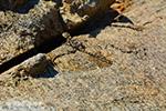 GriechenlandWeb.de Nas Ikaria | Griechenland | Foto 8 - Foto GriechenlandWeb.de