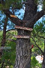 Berggebied Raches Ikaria | Griekenland | Foto 37 - Foto van De Griekse Gids
