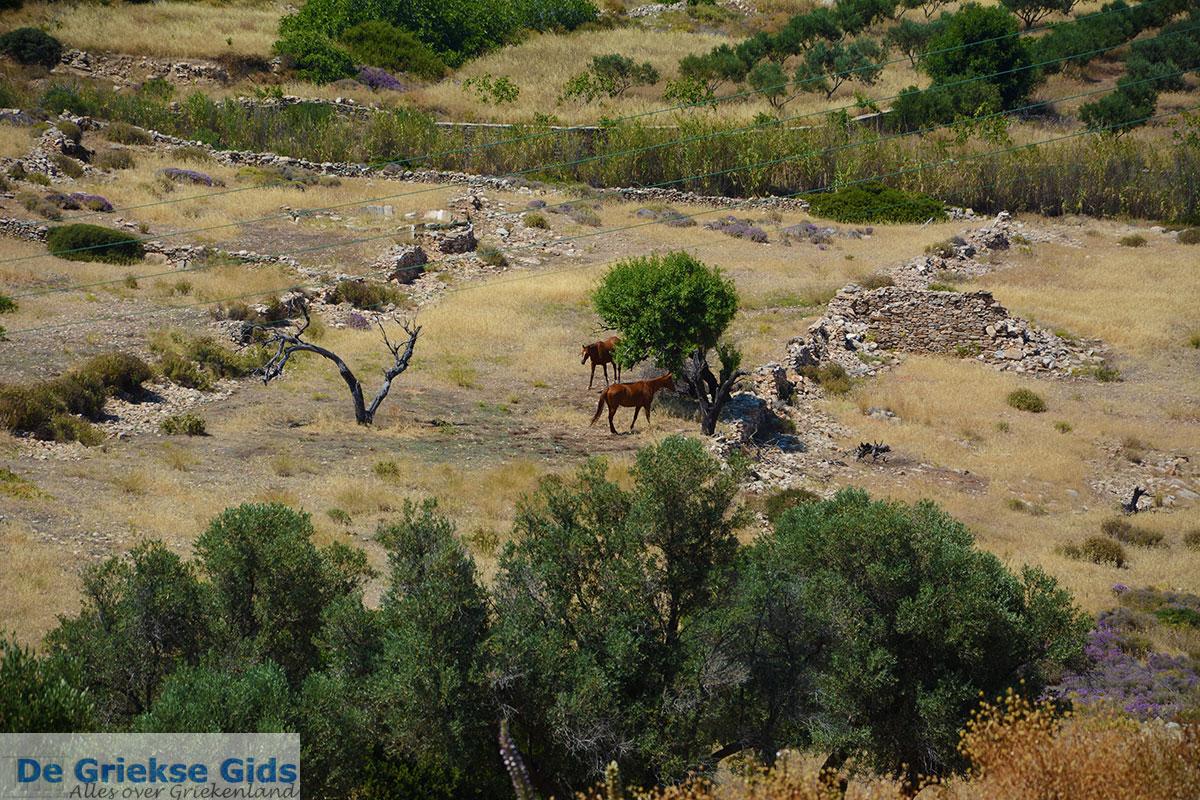 foto Agia Theodoti Ios - Eiland Ios - Cycladen Griekenland foto 279