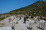 Geiten bij Agia Theodoti Ios - Psathi Ios - Cycladen foto 289 - Foto van De Griekse Gids
