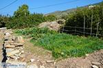 Psathi Ios - Eiland Ios - Cycladen Griekenland foto 312 - Foto van De Griekse Gids