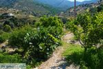 Psathi Ios - Eiland Ios - Cycladen Griekenland foto 322 - Foto van De Griekse Gids