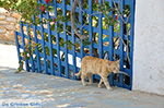 Eiland Iraklia | Cycladen | De Griekse Gids | nr 162 - Foto van De Griekse Gids