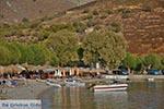 Emporios - Eiland Kalymnos -  Foto 9 - Foto van De Griekse Gids