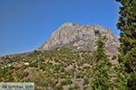 Myrties - Eiland Kalymnos -  Foto 1 - Foto van De Griekse Gids