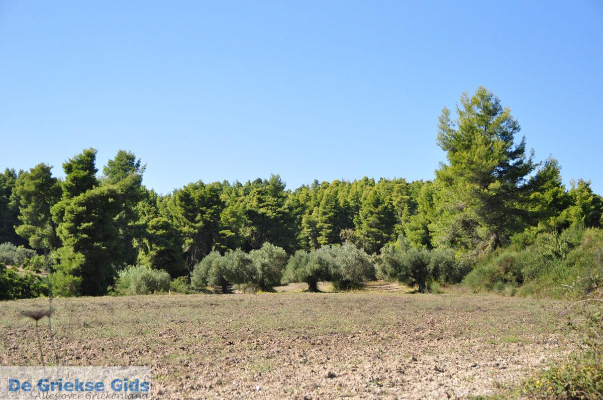 foto van Paliouri naar Aghia Paraskevi   Kassandra Chalkidiki   De Griekse Gids foto 1