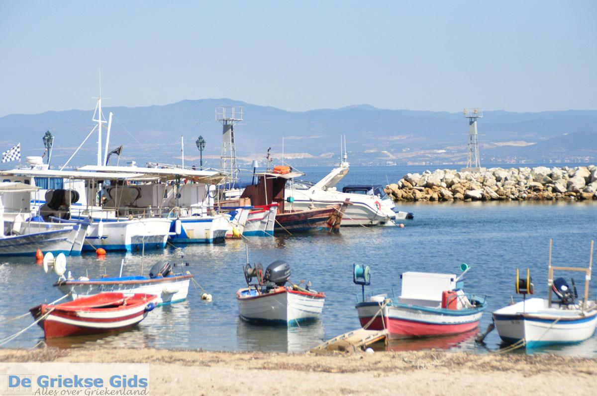 foto Nea Fokea | Kassandra Chalkidiki | De Griekse Gids foto 25