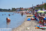 Polichrono | Kassandra Chalkidiki | De Griekse Gids foto 9 - Foto van De Griekse Gids