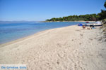 Golden Beach bij Pefkochori | Kassandra Chalkidiki | De Griekse Gids foto 1 - Foto van De Griekse Gids
