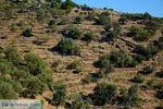 Pera Meria | Overal eikenbomen | Kea (Tzia) - Foto van De Griekse Gids