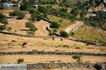 Onderweg naar Kato Meria | Kea (Tzia) foto 3 - Foto van De Griekse Gids