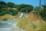 Onderweg naar Kato Meria   Kea (Tzia) foto 7 - Foto van De Griekse Gids