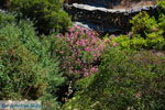 Bergpad-wandelpad naar Karthaia | Kato Meria | Kea (Tzia) 23 - Foto van De Griekse Gids