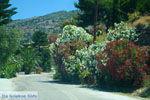 Pisses | Kea (Tzia) | De Griekse Gids foto 10 - Foto van De Griekse Gids