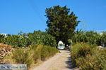 GriechenlandWeb.de Kimolos dorp | Kykladen Griechenland | foto 81 - Foto GriechenlandWeb.de