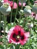 voorjaars bloei in griekenland - Foto van jose nijssen