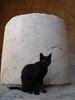 Zwarte kat - Foto van Ron Buitendijk