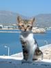 GriechenlandWeb.de Pigadia Karpathos - Foto Ron Buitendijk