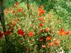 bloemenpracht - Foto van nadine