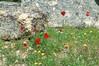 bloementefereel - Foto van Caroline Dewilde