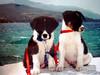 Sammie en Koukla - Foto van Cecilia
