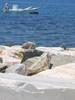 bootje in de haven van Parikia - Foto van Lodewijk Bolt