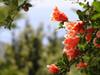 bloemen - Foto van brig