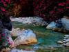 Oleanders - Foto van Lucien Vijverberg